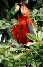 A picture of a parrot -- well, a macaw, really